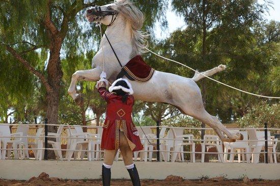 Pera, Portugal: Classical Lusitano Horse Show