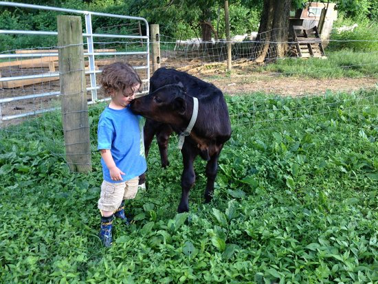 Olde Fogie Farm: Calf Love