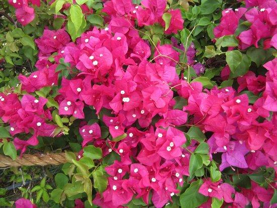 Kaanapali Beach Hotel: Flowers at KBH