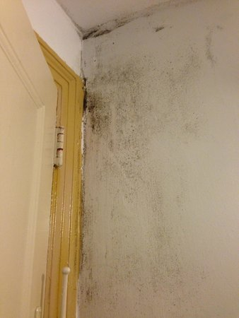 Hotel Carter: Some more mould in the bathroom