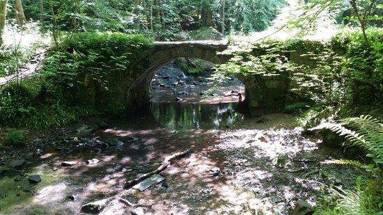 Wepre Park: Brook