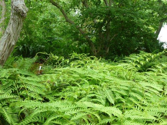 Botanical Gardens (Hortus Botanicus): FERN GARDEN