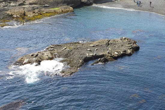 Point Lobos State Reserve: Sea Lion Cove