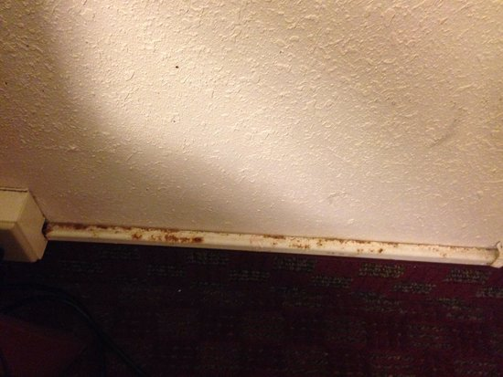 Quality Inn Opryland Area: Rust and did colored walls