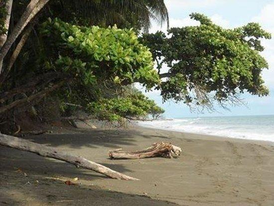 El Remanso Lodge: Beautiful wild beach