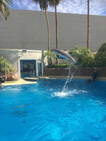 Dolphins Picture Of Siegfried Roy 39 S Secret Garden And Dolphin Habitat Las Vegas Tripadvisor