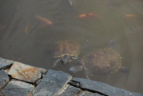 Zoetry Agua Punta Cana : По утрам черепахи составляют вам компанию за завтраком