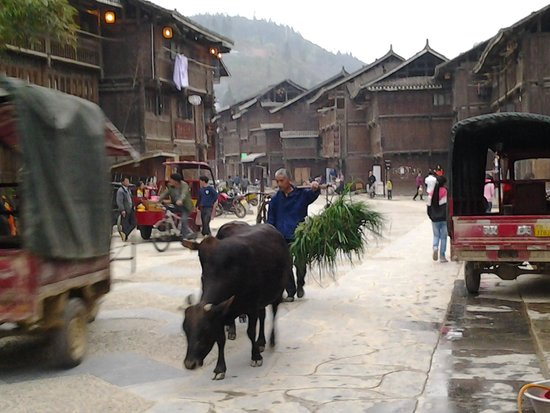 Zhaoxing DongZhai: till the cows come home