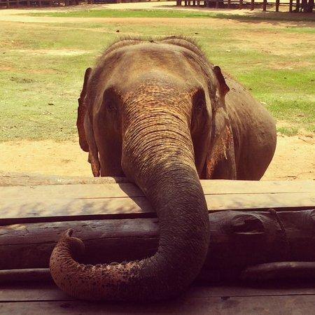 Pinnawala Elephant Orphanage: feed-me-fruits