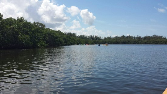 Sea Life Kayak Adventures: Entering mangroves