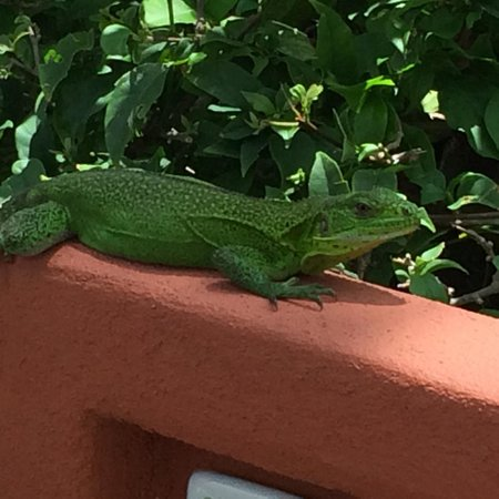 Embarc Zihuatanejo: Say hello to a local resident