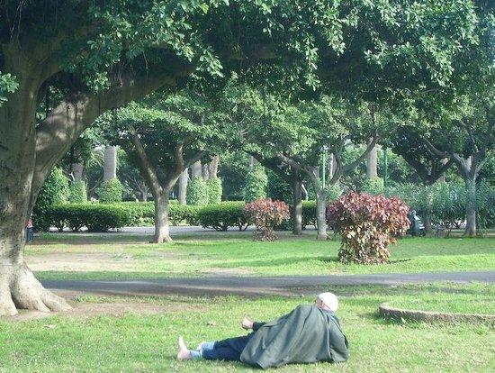 Parc de la Ligue Arabe : Una siesta en Parque de la Liga Arabe