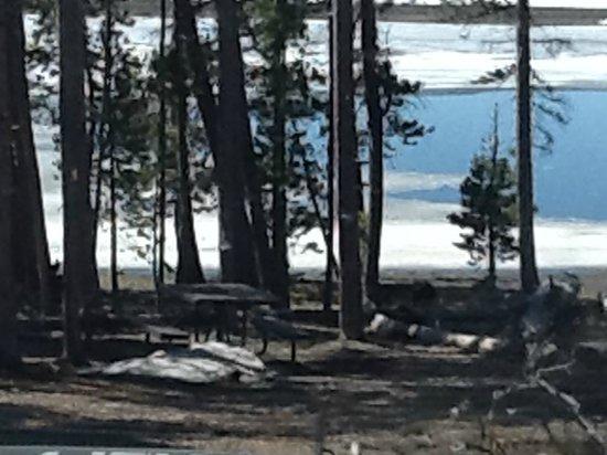 Yellowstone Lake: Picnic area