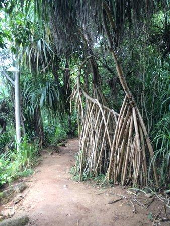 Jungle Beach действительно находится в джунглях!