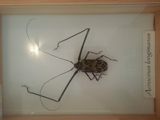 California Oil Museum: The bug collection