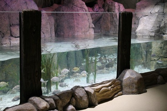 One view of walkthrough exhibit - Picture of SEA LIFE ...