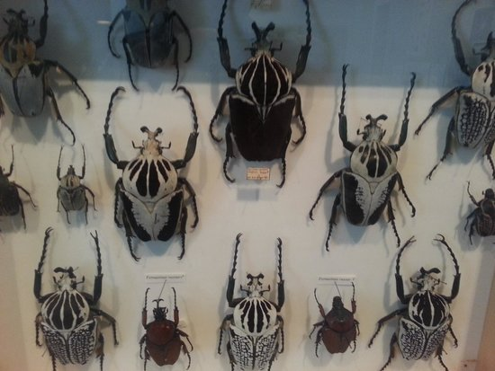 Santa Paula, CA: The bug collection