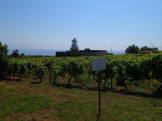 Capofaro Malvasia & Resort : lighthouse and vineyard