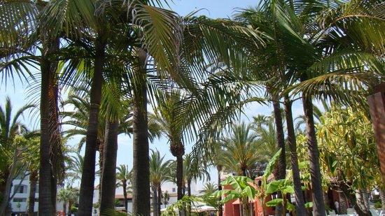 Club Marmara Marbella: vue d'un transat piscine