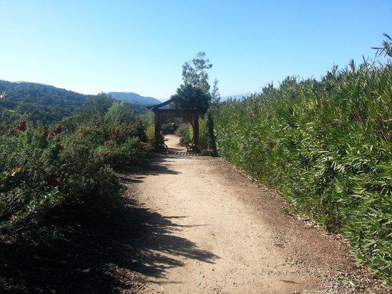 Meditation Mount: hiking path