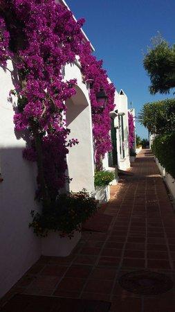 MacDonald Villacana Resort: Gardens