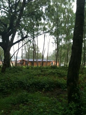 The Sherwood Hideaway: view of our lodge from the walk in the woods