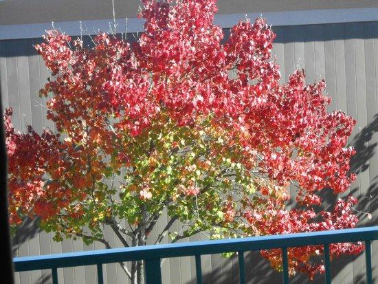 Lynina Inn: Fall colors