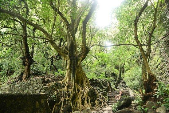 Casa de la Vida: Hiking Trail