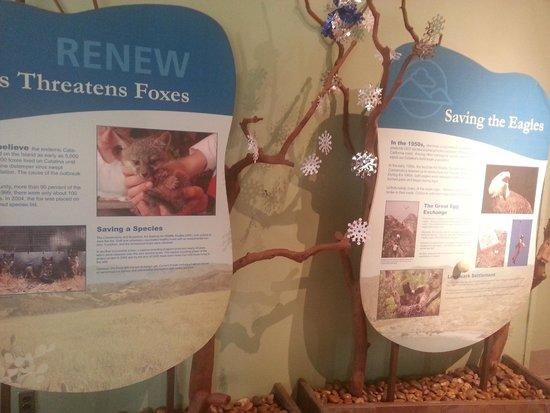 Santa Catalina Island Interpretive Center: about the animals