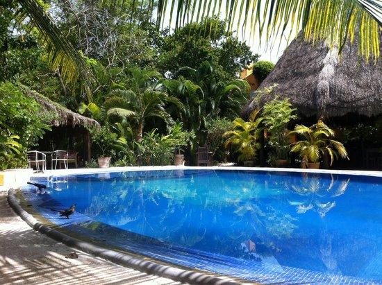 Don Diego de la Selva : Gezellig, mooi en proper zwembad in zeer mooie omgeving. Top!
