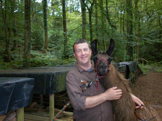Nidderdale Llamas: David and Gus