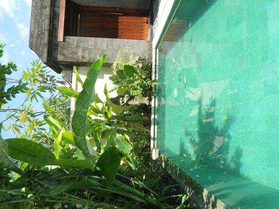 Mahagiri Villas : Our own pool