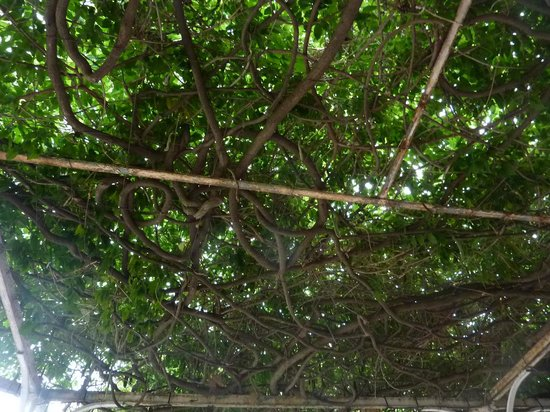 Hotel Les Glycines: La glycine sur la terrasse