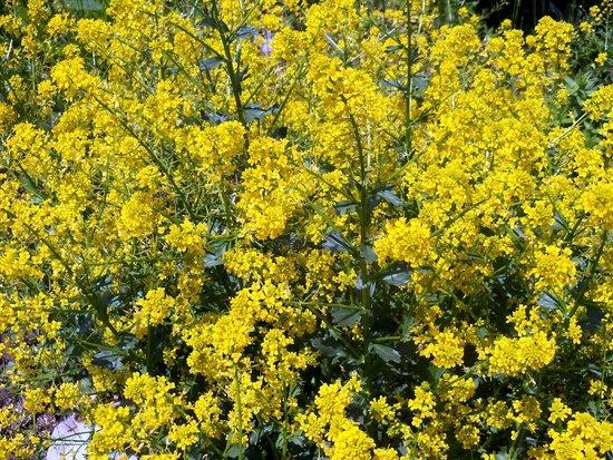 Des fleurs et des lilas picture of les jardins du cap a for Fleurs et jardins