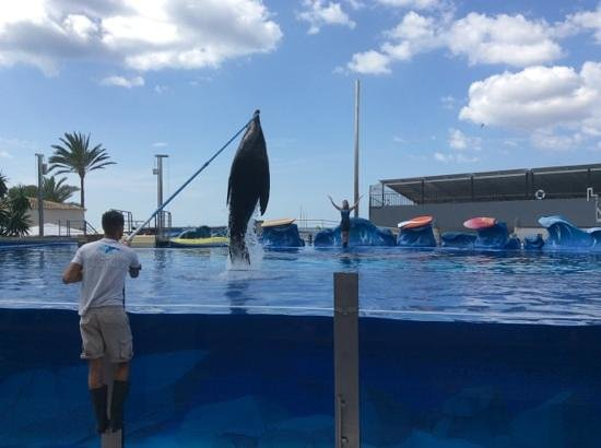 Aparthotel Playa Mar & Spa: marineland