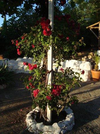 Posada La Nina Margarita: Flowers of the place