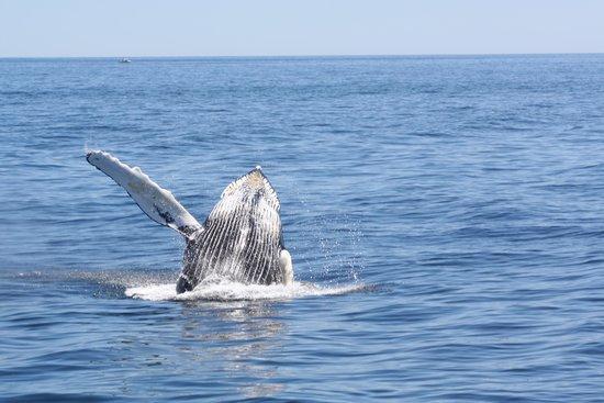 Cape Ann Whale Watch: A Friendly Whale waving to us