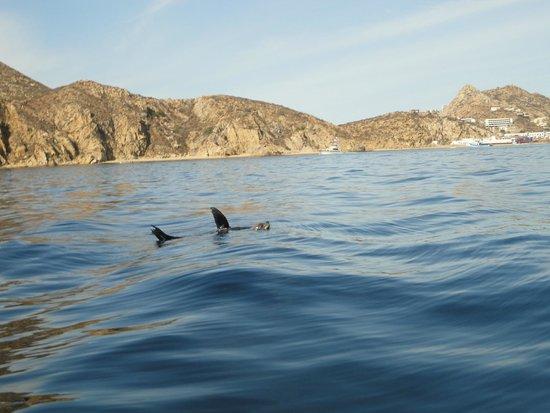 Villa La Estancia: VLE - Happy Seal floating in the Sea of Cortez