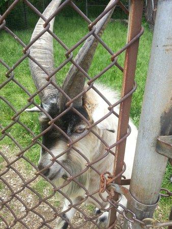Lagoon Deer Park: Feed me?