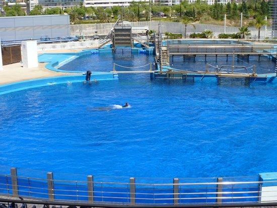 Oceanografic: Show de delfines