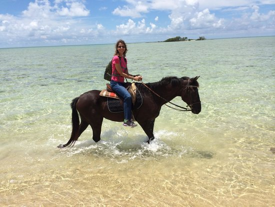 Happy Trails Stables, Windsor Equestrian Centre : Limbo and I enjoying a walk in the ocean.