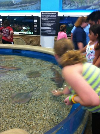 The Institute for Marine Mammal Studies: Touch Tank