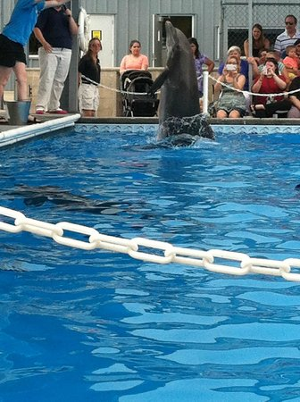 The Institute for Marine Mammal Studies: Dolphins