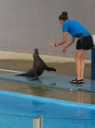 The Institute for Marine Mammal Studies: Sea Lions
