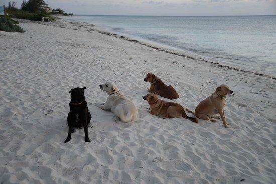 Bohio Dive Resort: The hotel dogs!