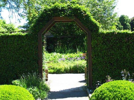 Botanischer Garten - Japan Garten: garden grounds