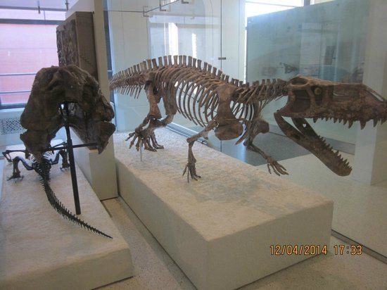 American Museum of Natural History: Tiranossauro Rex
