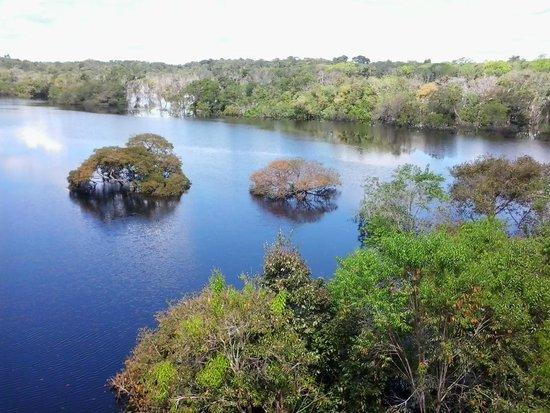 Amazon Tupana Lodge: vista do rio em frente ao lodge