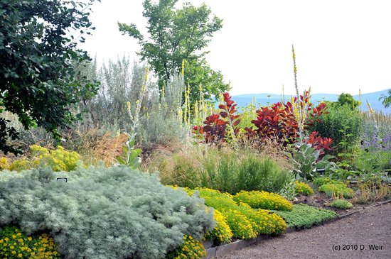 Drought-tolerant plants thriving in the dry Okanagan climate