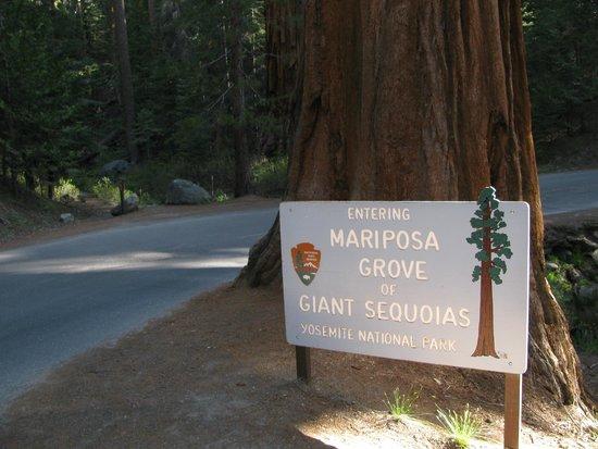 Mariposa Grove of Giant Sequoias : Entrada